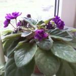 Какие комнатные цветы посадить при недостатке света