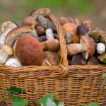 Вкусные блюда из грибов